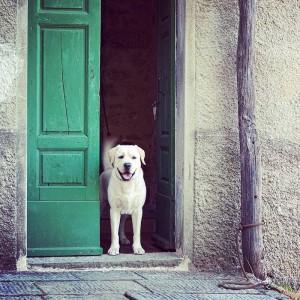 Doggie in Fibbialla toskana hilltop tuscanyvillages village dog dogs doggiehellip