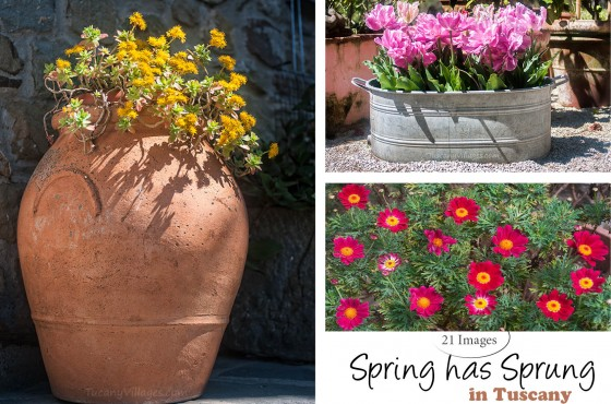 Spring has Sprung in Tuscany 2015
