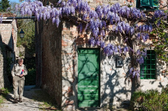 Wisteria in Collodi