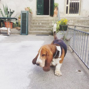 Was welcomed in the street by a friendly dog Whathellip
