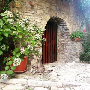 Cat outside a Tuscan village house Tuscan italyiloveyou italy tuscanyhellip